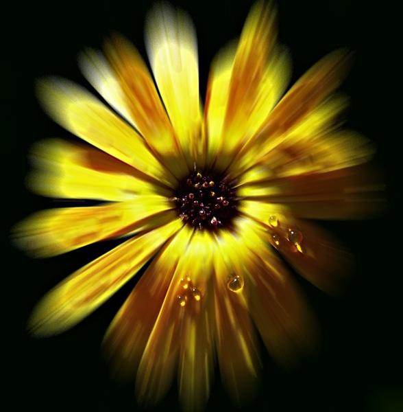 Flower burst by Topcat