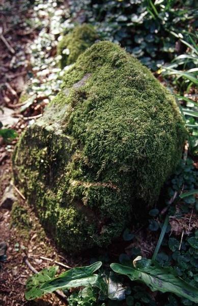 Mossy Rock by ckristoff