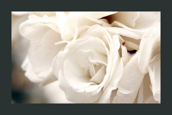 white satin by mcgregom