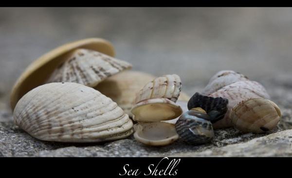 Sea Shells by keith47
