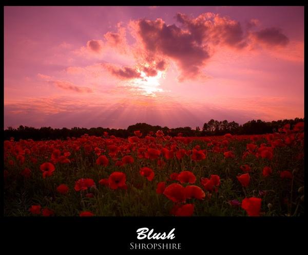 Blush by monoman