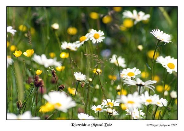 Wild Flowers by waymol