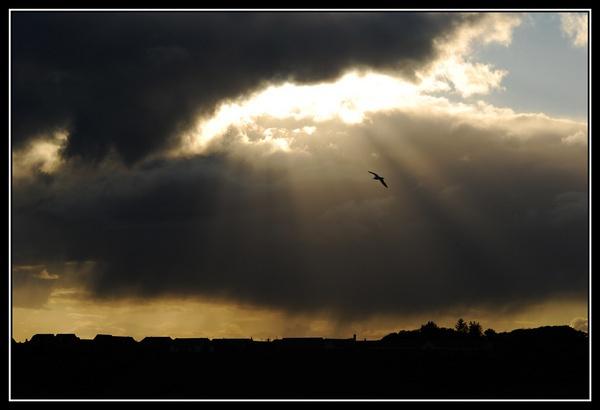 flight to heaven... by olesya