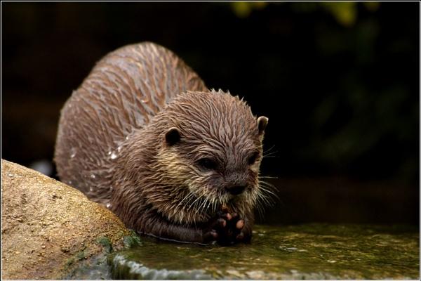 Otter by Kim Walton