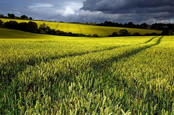 Wheatfield by bannview