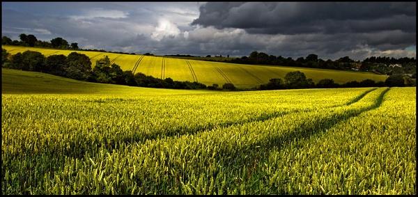 Wheatfield 2 by bannview