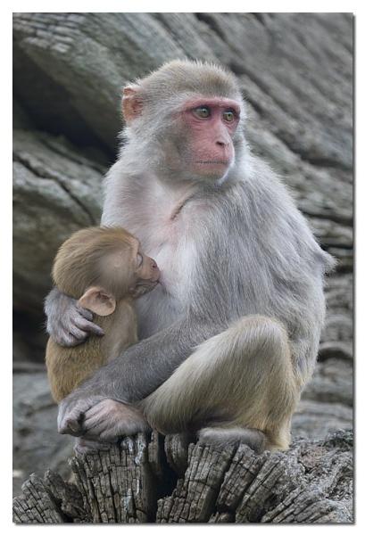 Monkey by jeanette