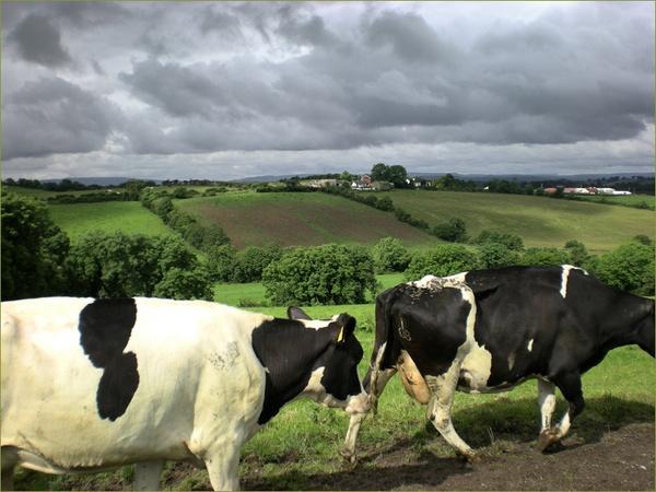 New Pastures by Mavis