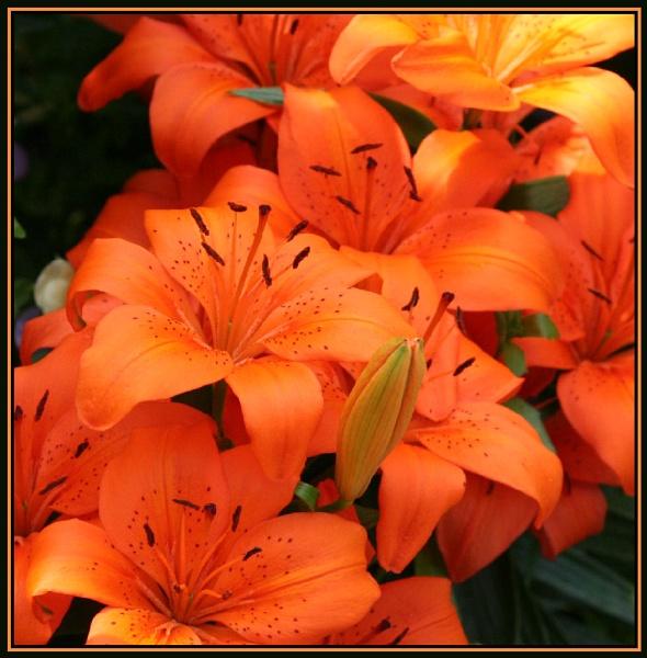 Orange by X5DJM