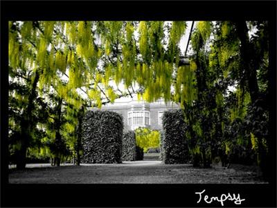 Tempsy Yellow Flowers by EmmaStu