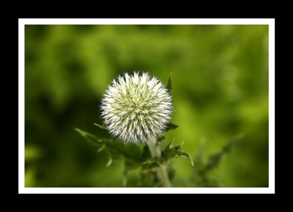 green by mcgregom