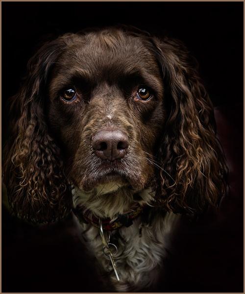 My Pal, Pepper by photographerjoe