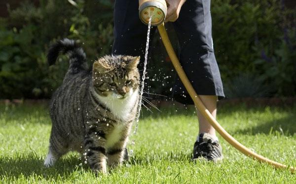 water cat by nigell