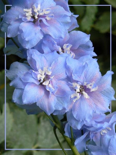 True Blue ..... by NickBrandon