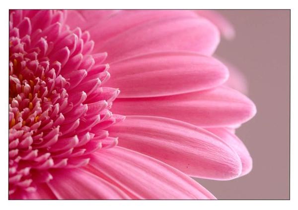 pinky by CRAIGR2