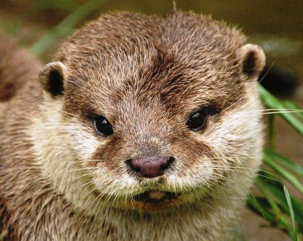 I AM A cute LITTLE OTTER by clur