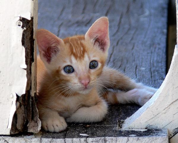 Klinical Kitten by rikewoo