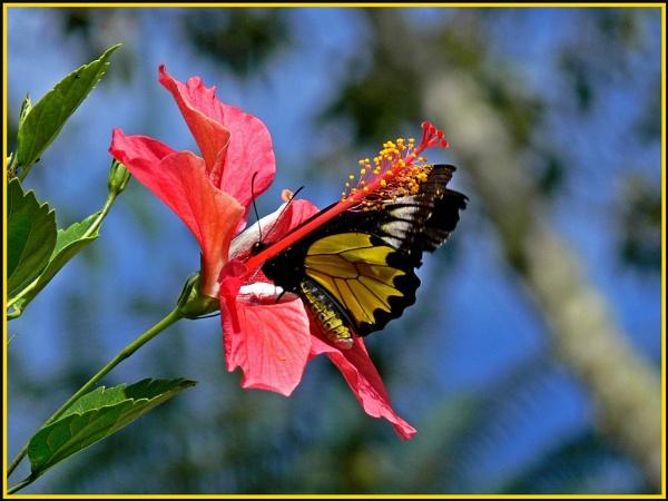 Nectar Seeker by rikewoo