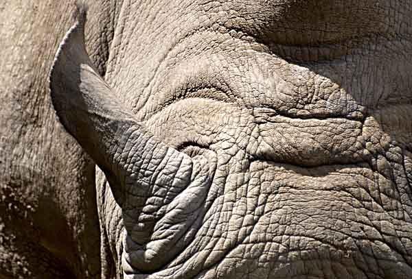 Rhino Hide 1 by saxon_image