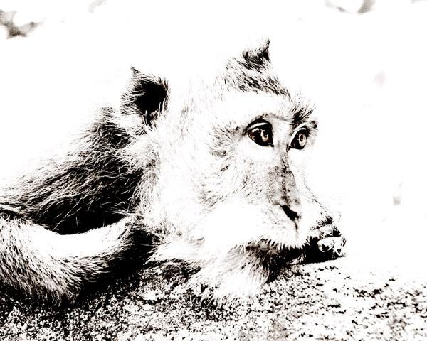 Monkey by LinneaFrank