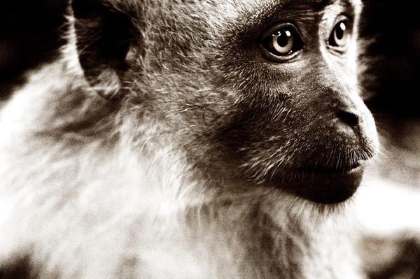 Bali Monkey by LinneaFrank