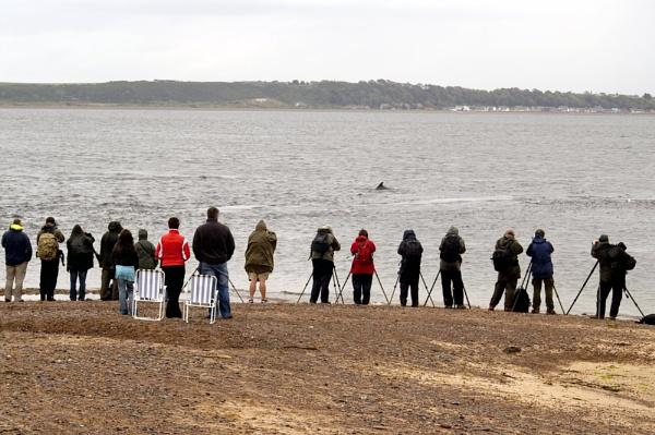 Dolphin Watchers... by jjmills