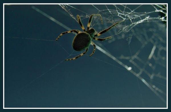 spider on bridge by cramj