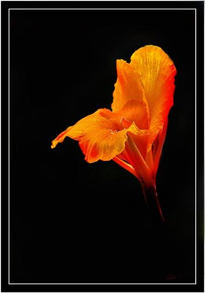 Flower by Lenr