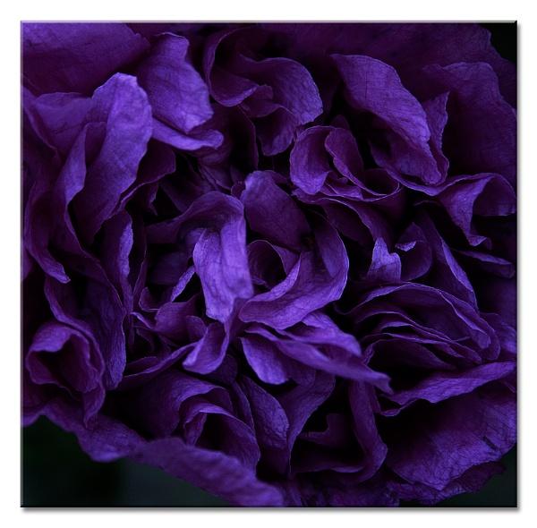 ....... A FLOWER????? by MrsS