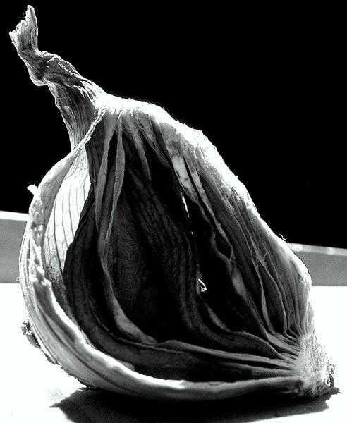 Onion II by Topo