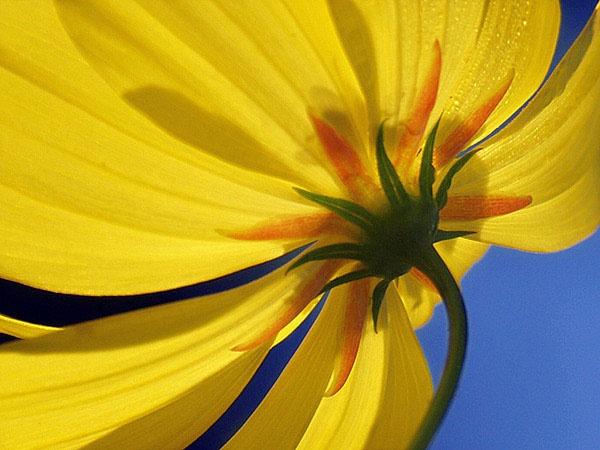Yellow by ariandino