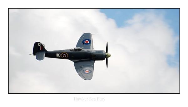 Hawker Sea Fury by phillips
