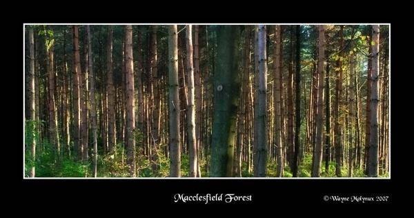 Macclesfield Forest by waymol