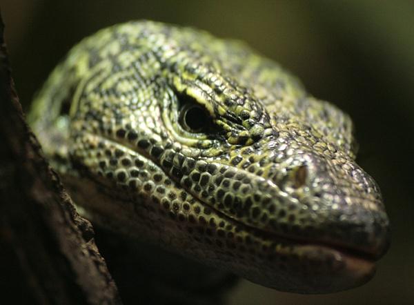 Lizard by Bradfleet12