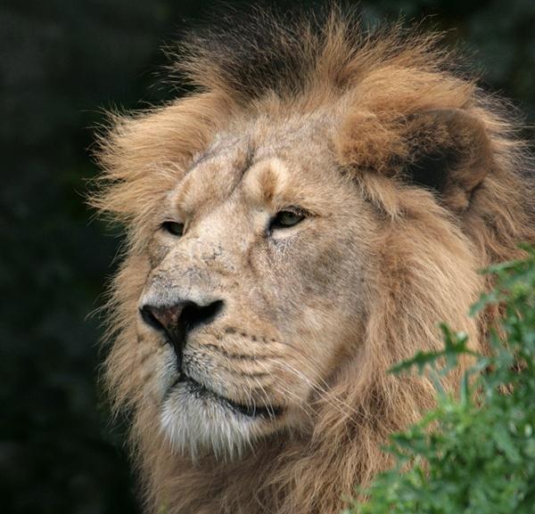 The Lion King! by Bradfleet12
