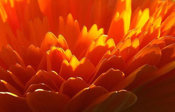 Orange by theeyesoftheblind