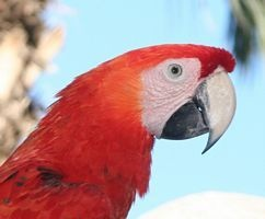 macaw by boxer57