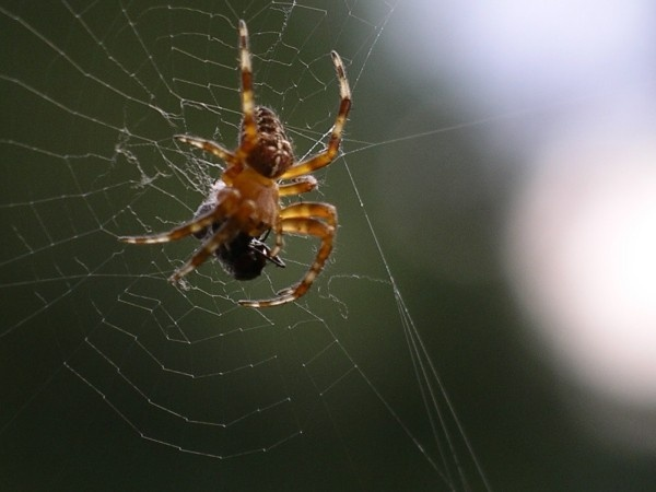 Boris the Spider by arhb