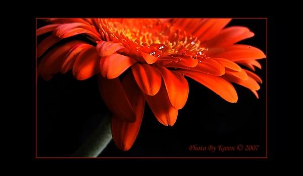 Orange delight by mandarinkay