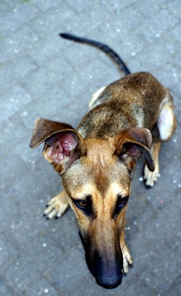 Good dog by vogelsang