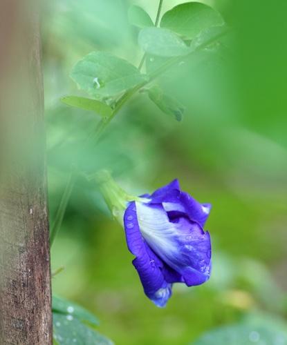 Blue by Desh_M