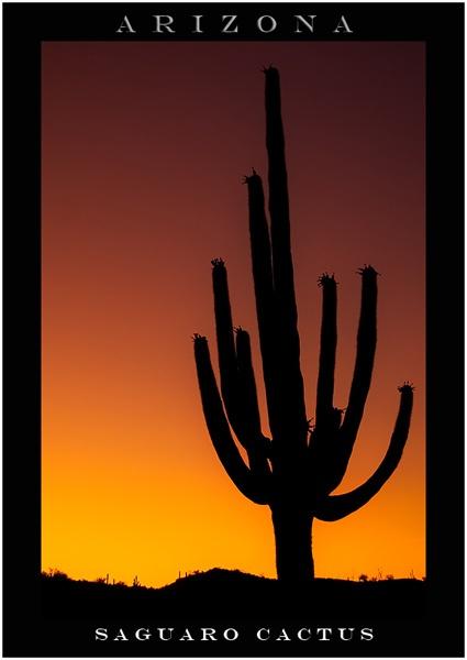 Saguaro Cactus by deanl