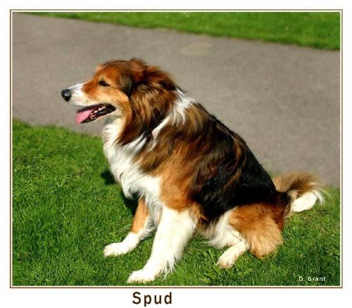 ***Spud*** by daringdaphne