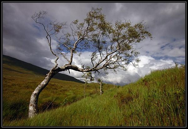 Windswept Tree by u47sb2