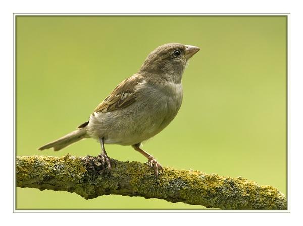 Un Petit Oiseau by SueWB