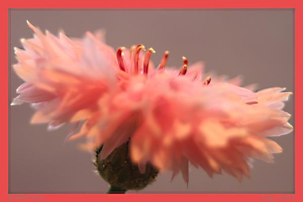 Ballerina by catnappin