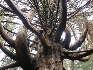 Wunderbaum (magic tree) by daniello32