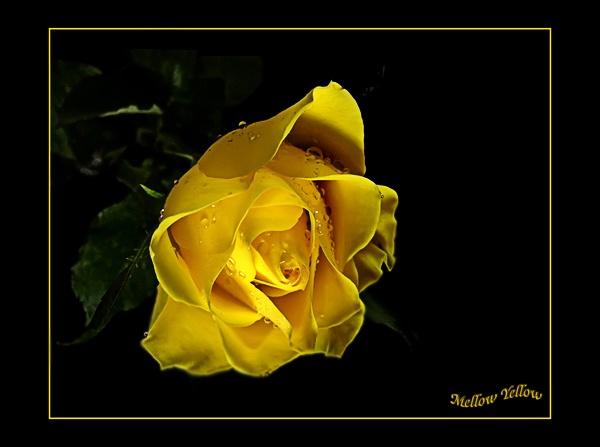 Mellow Yellow 2 by mandarinkay