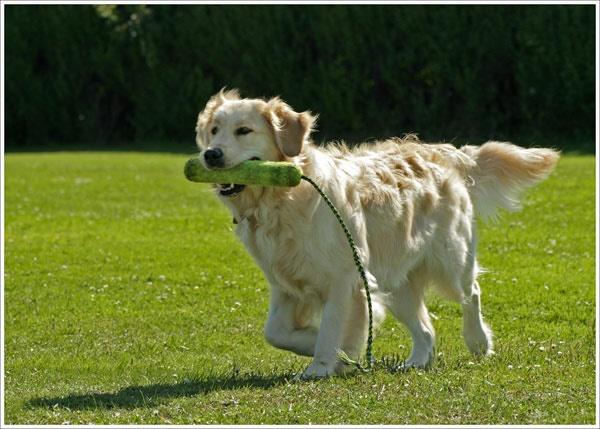 Fetch by marlin