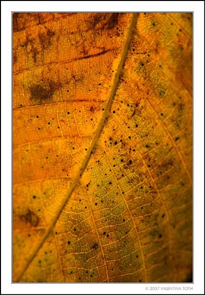 Leaf by yuno